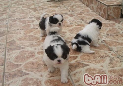 为什么狗狗会互闻对方的生殖器-成犬饲养
